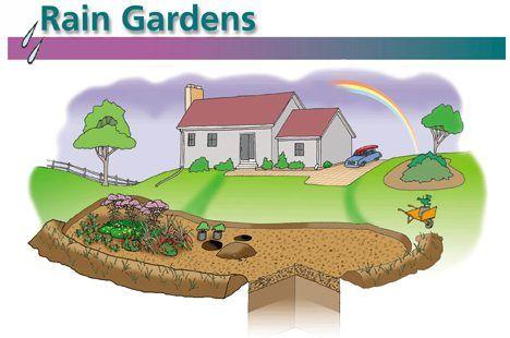 Rain Gardens cartoon image