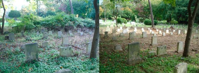 cleaning the graveyard before after