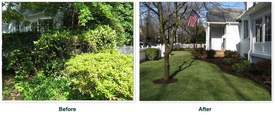 Before and after image, before showing an extremely overgrown front yard and after shows a neatly manicured front lawn