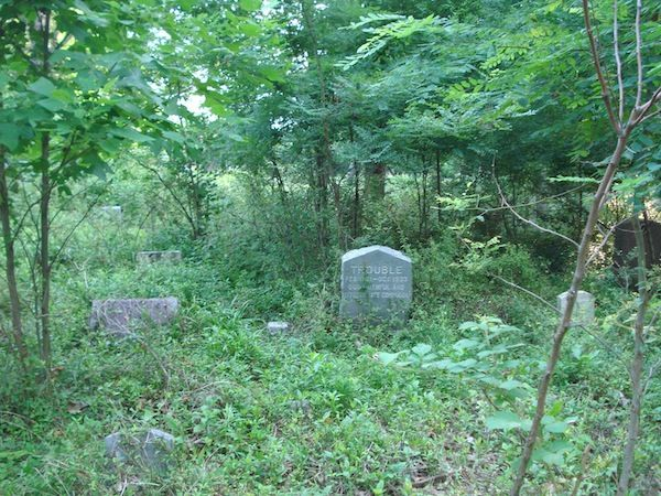 gravestone in plants and trees
