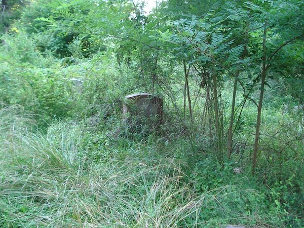 old gravestone in plants and bushes