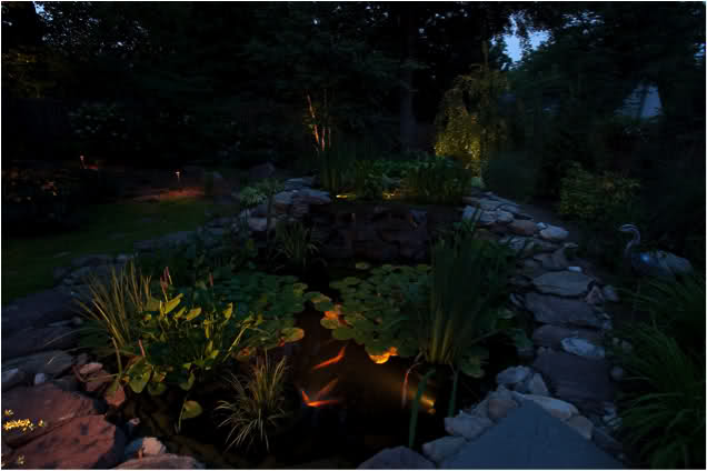 A large outdoor pond with plants at night