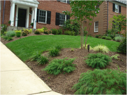 green lawn with plantings in front of a house