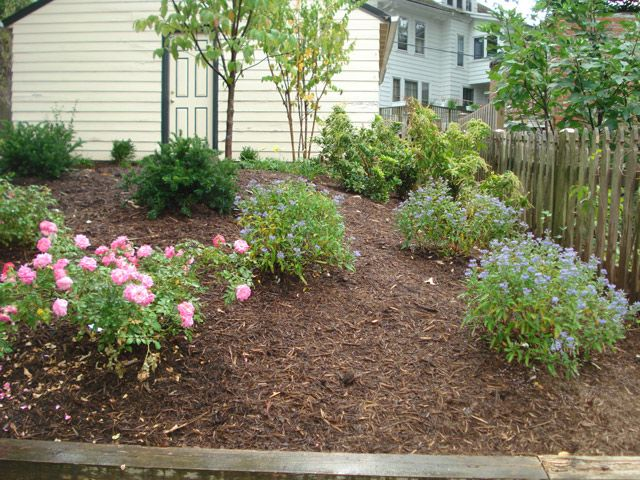Low Maintenance Landscaping Design Washington Dc Johnson S