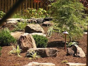 A rock garden with shrubs
