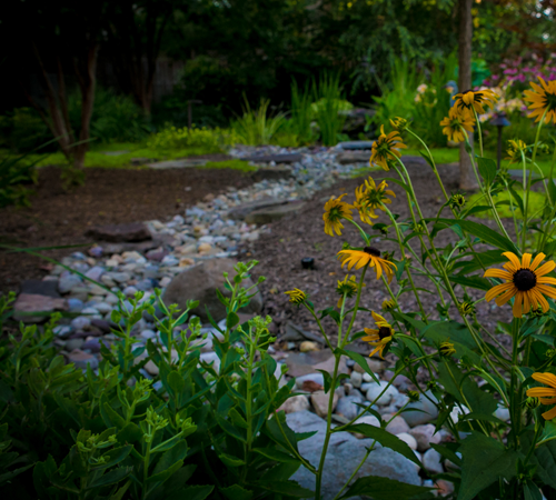 Sunflowers and greenery in front of decoratvie stone dry creek bed feature in backyard