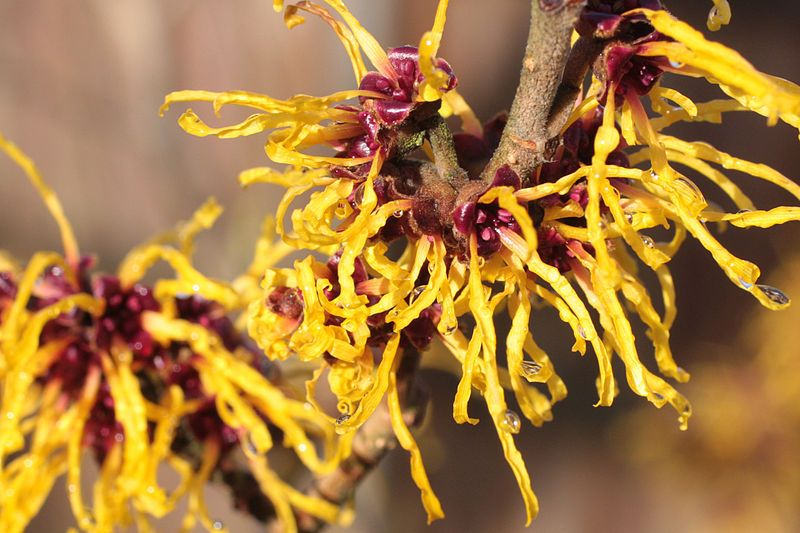 Winter Landscaping – Plants, Shrubs, And Trees Can Add A Magical Touch To Your Yard