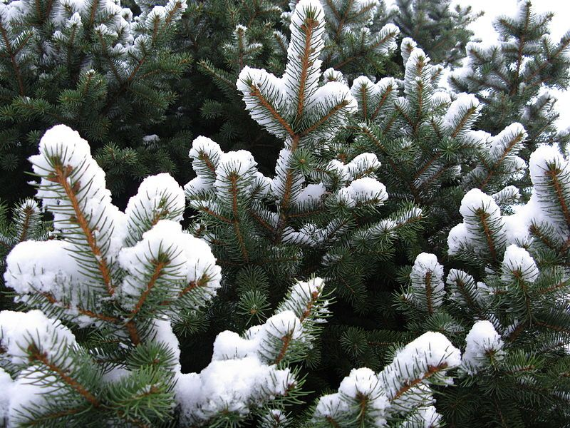 Winter Landscaping for your Yard