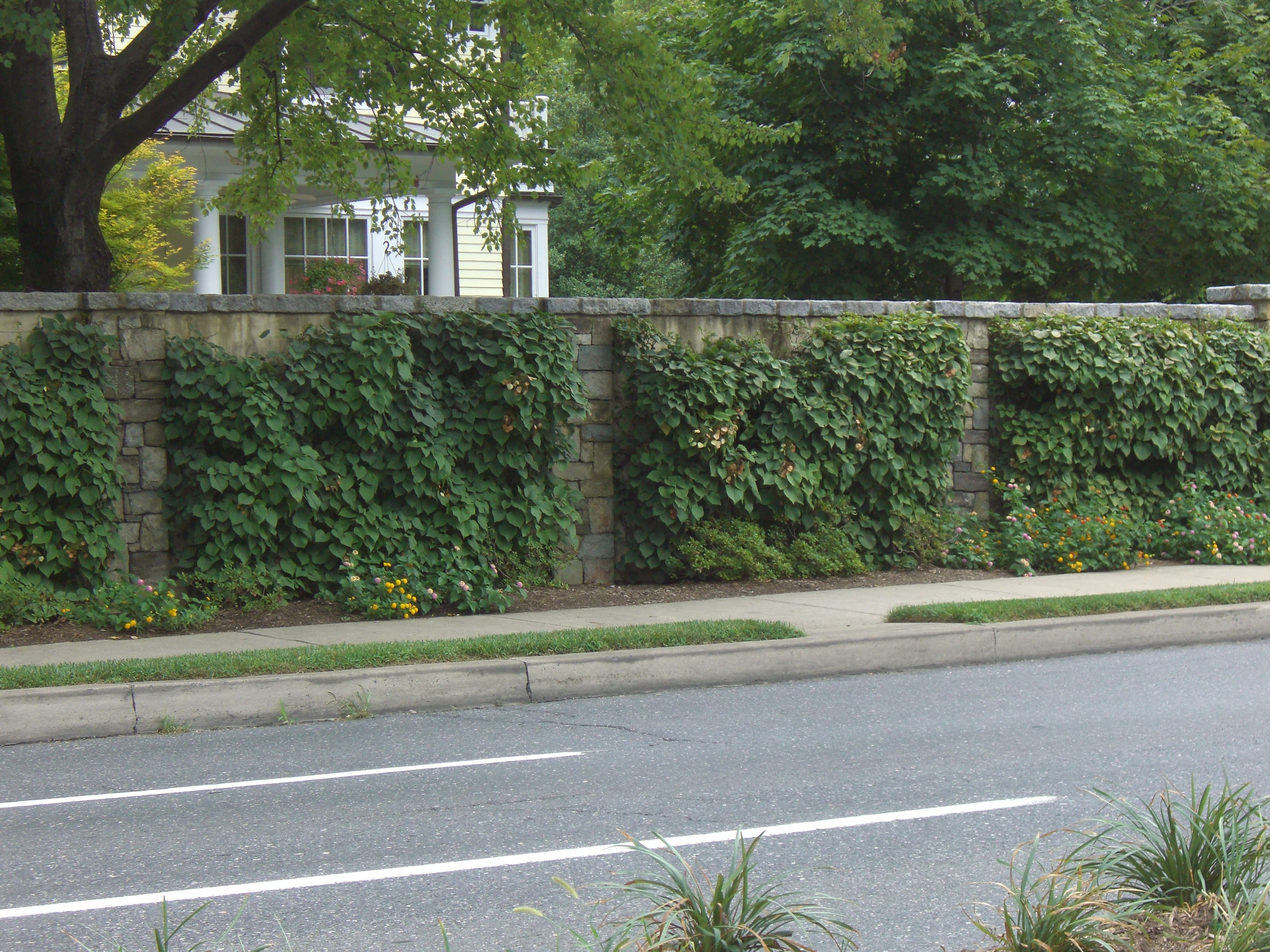 Stone block retaining wall with greenery on it in front of a house, viewed from across a street