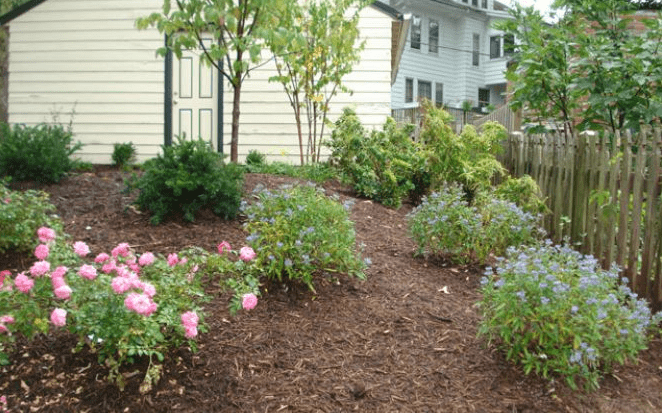 Mulch with bushes