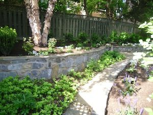 Decorative stone wall in backyard with greenery