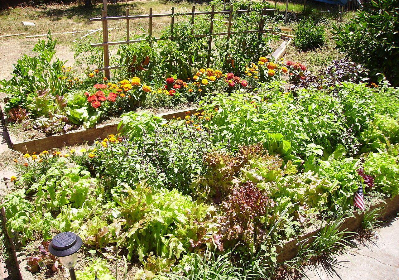 Vegetation and flower garden