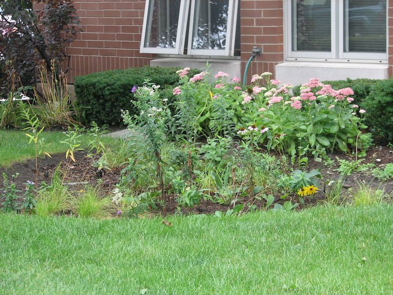 A Rain Garden to Solve Your Drainage Problems
