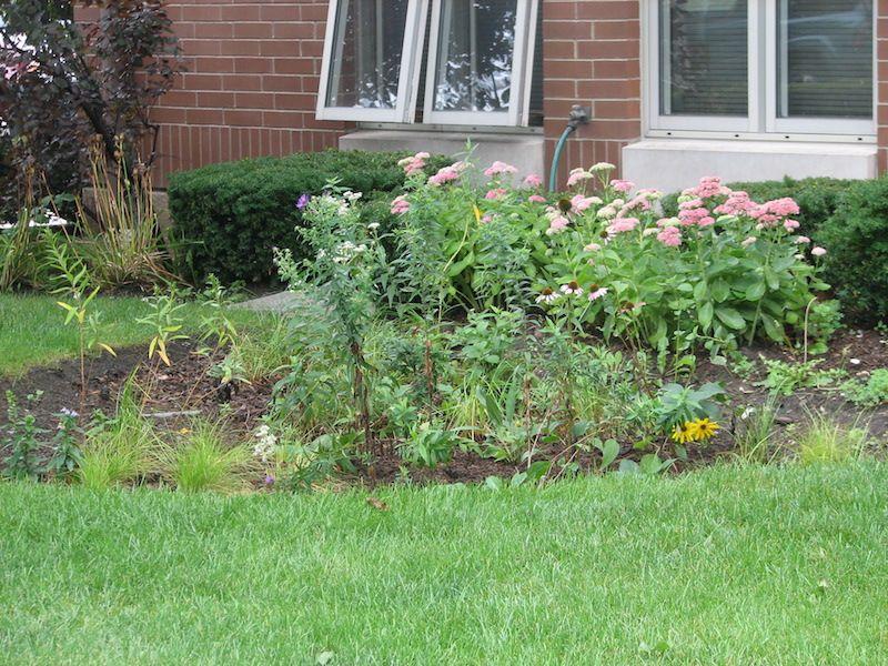 Rain garden with flowers