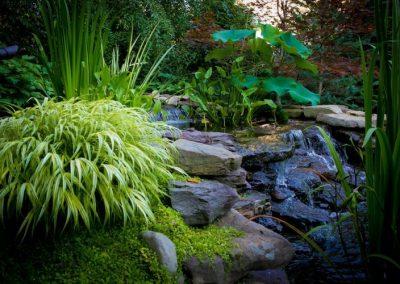 Backyard waterfall water feature with greenery