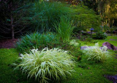 Backyard with large shrub plantings