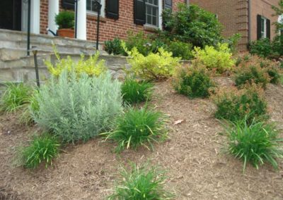 Mulched area in front of house with green plantings