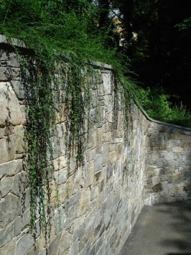Tall stone retaining wall with greenery