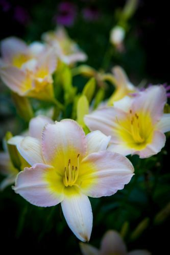 Close up shot of light pink and yellow tropical flower