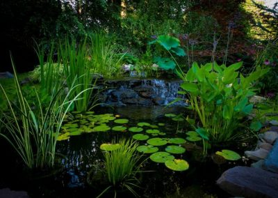 Backyard large pond and waterfall water feature with waterlillies and water plants