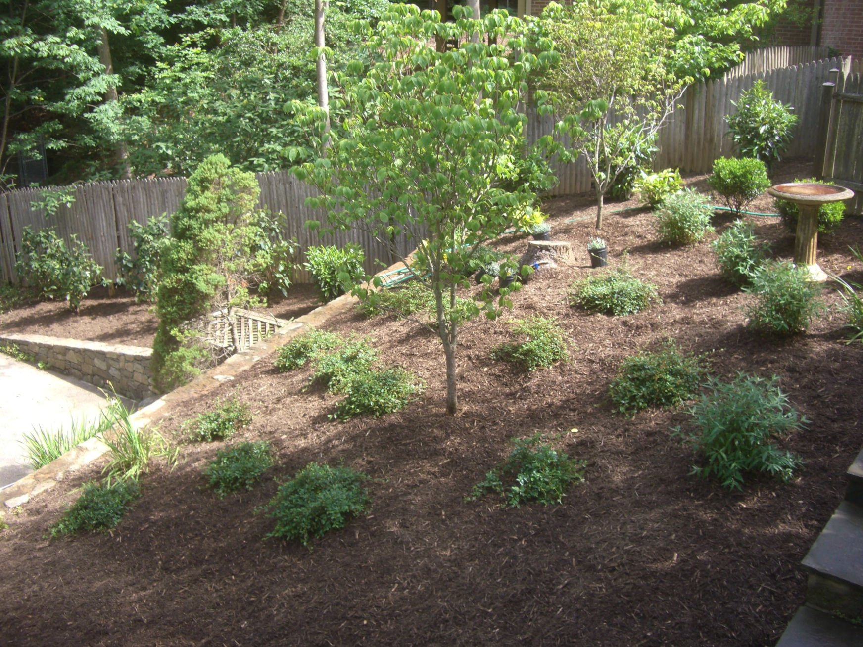 front yard tree planting