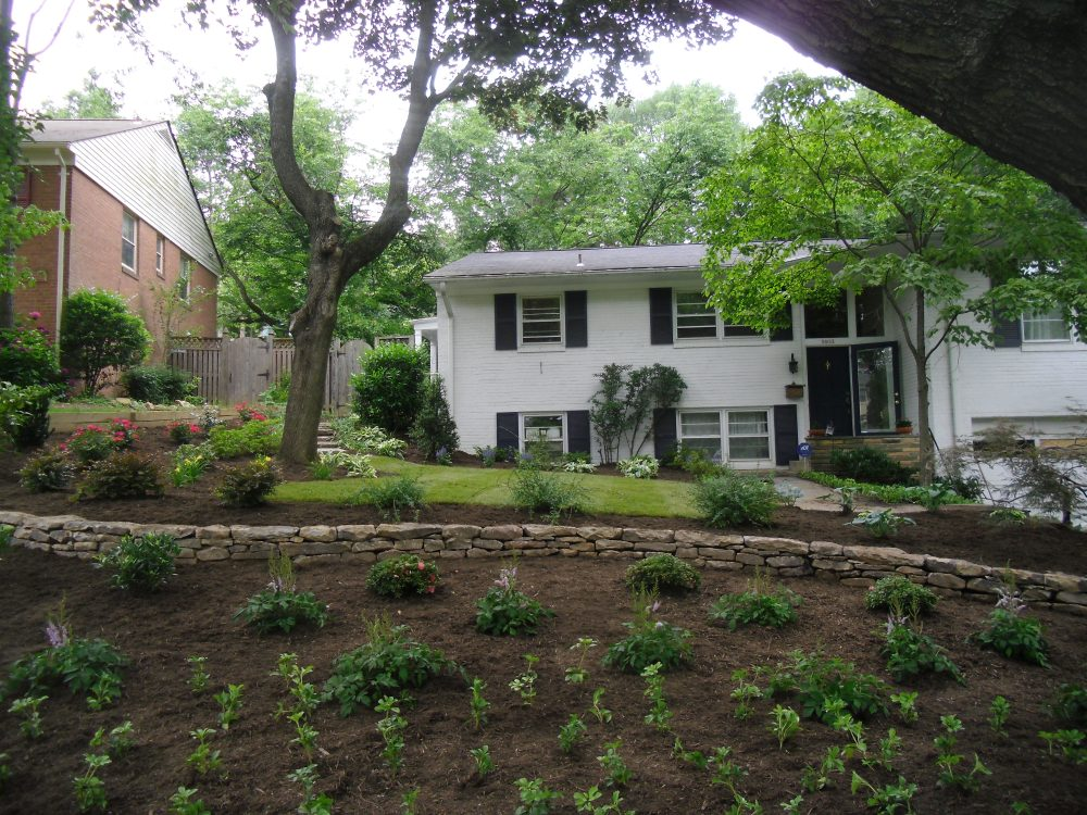 backyard tree planting