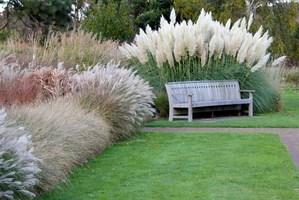 Ornamental Landscaping Grasses